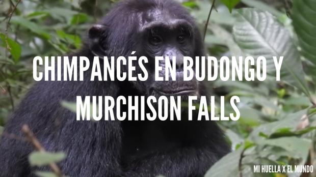 BUDONGO Y MURCHINSON FALLS (31)